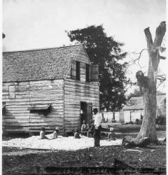 The cotton gin made large-scale production of cotton profitable