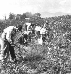 Many African-Americans turned to sharecropping after the Civil War and continued to live in poverty.